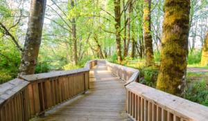 Western Washington boardwalk trail through trees